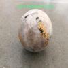 White-Rainbow-Engrave-Usai-Reiki-Set-Sphere